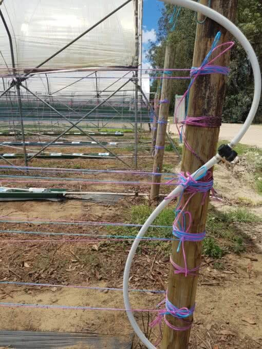 Trellis twine - installation example using both colours
