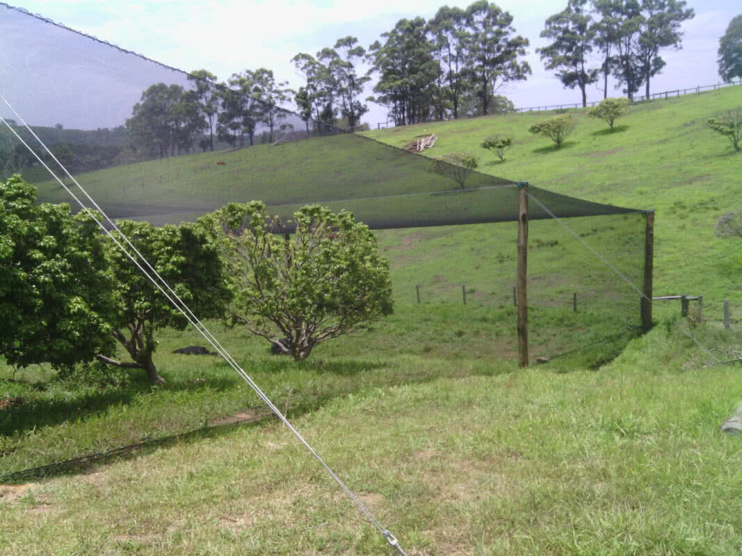 heavy birdnet over lychees, protected cropping solutions