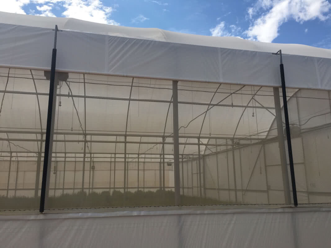 GreenLife Structures built citrus seedling nursery greenhouse with roll up walls and insect screen