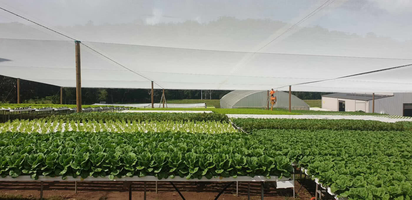GreenLife Structures' 12mm white quad shaded hydroponic lettuce