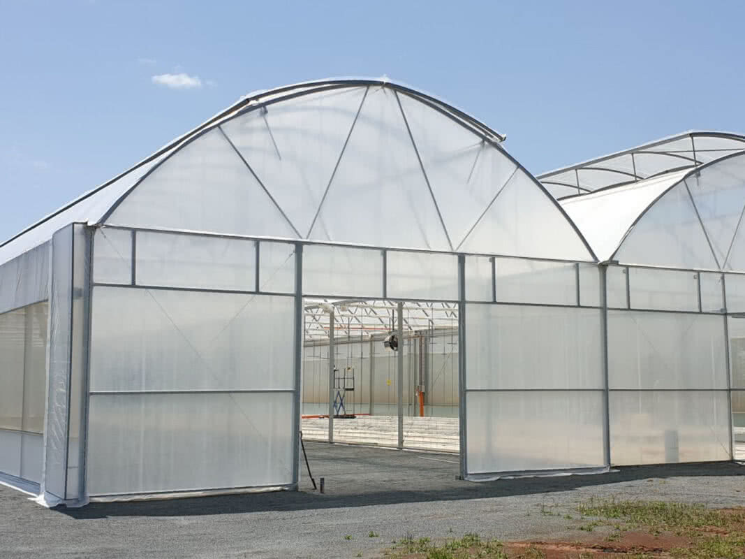 2020 20x50m 2-bay Gullwing autovent Greenhouse cropped