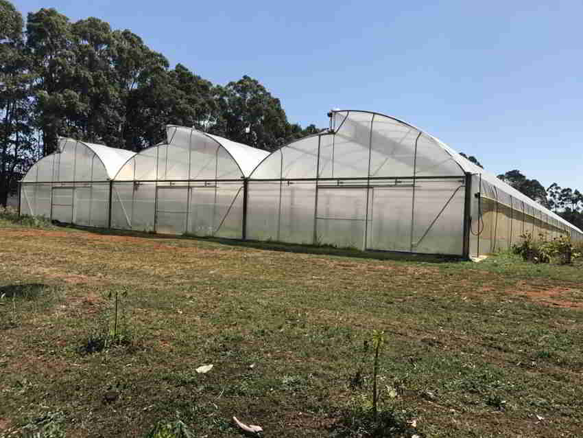 Commercial Greenhouse for Anderson Thai Produce